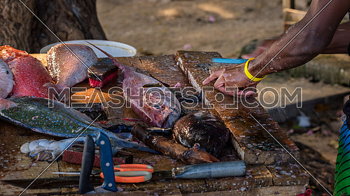 Close up to fisher's hands cleaning the fresh fish on a dirty wooden table on the beach,Mauritius.