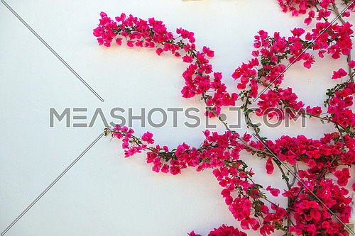 flower and white wall outdoor decoration