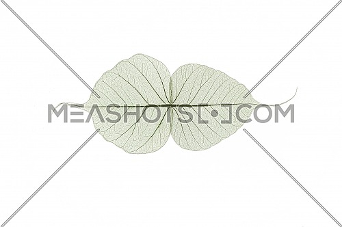 A border of colored transparent skeleton leaves on a white background. Top view, flat lay, banner