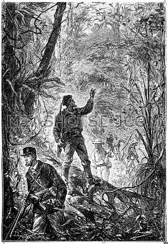 The sailors venturing sisters these admirable forests, vintage engraved illustration. Jules Verne Mistress Branican, 1891.