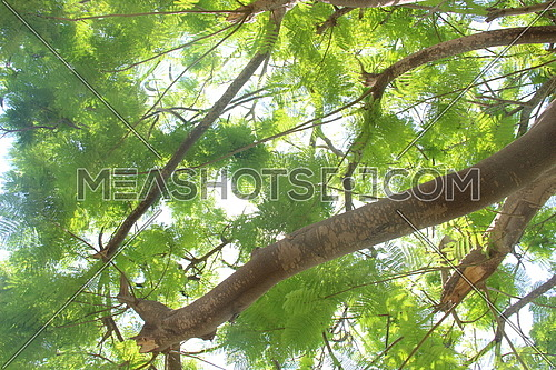 a photo for a tree in a garden in Egypt showing the stems and leaves