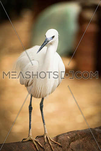 standing white bird looking side