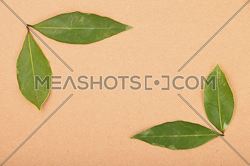 Frame of two groups of green bay laurel leaves on brown kraft paper background