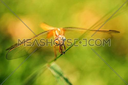 dragon fly close up in a green surrounding