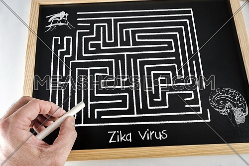 Conceptual diagram drawn with chalk on a Blackboard green of the Of Zica virus (ZIKV), Labyrinth without resolved