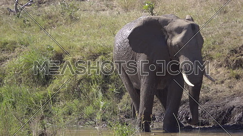 View of an elephant standing in a river