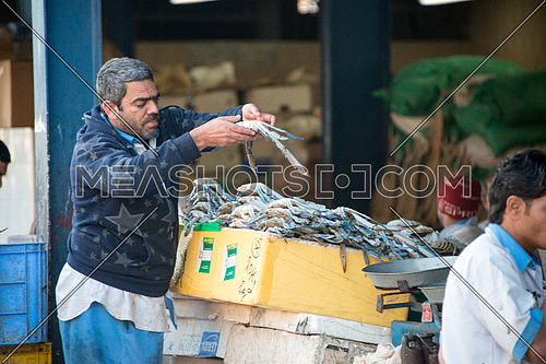 fish sales man holding a blue crab in fish market dubai
