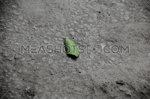 Close up for fallen green tree leaf on concrete ground ad day
