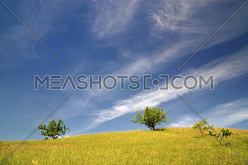 tree on meadow at sunny day