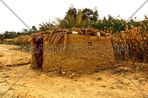 a photo from a rural area in Egypt showing a farmer hut within the  agricultural lands and palm trees