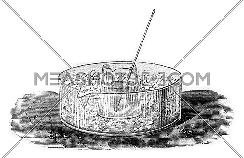 Freezing of the olive oil, vintage engraved illustration. Magasin Pittoresque 1869.