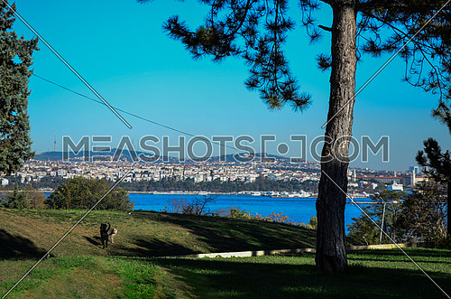a public park  and a dog is walking freely in it, sea appears on the background