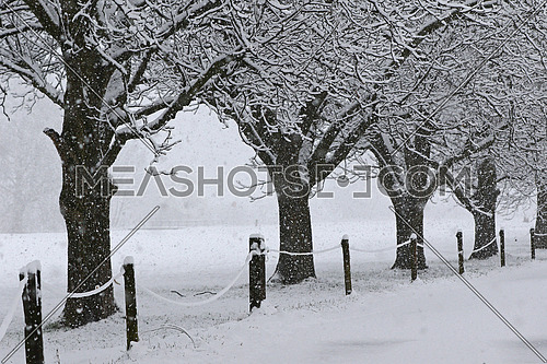 Trees,road, road and fence covered in fresh snow during a heavy snowstorm