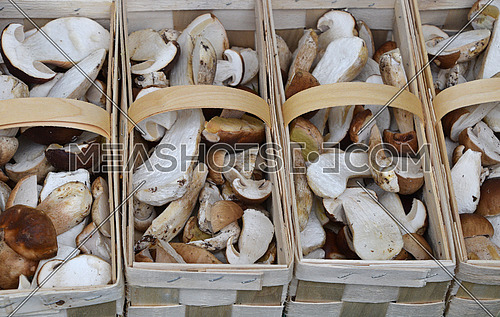 Close up brown porcini edible mushrooms (Boletus edulis, known as penny bun or cep) in wooden crate box at retail display, high angle view