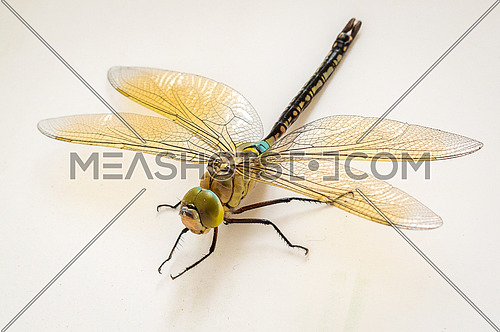 Anisoptera Dragonfly close up on neutral background