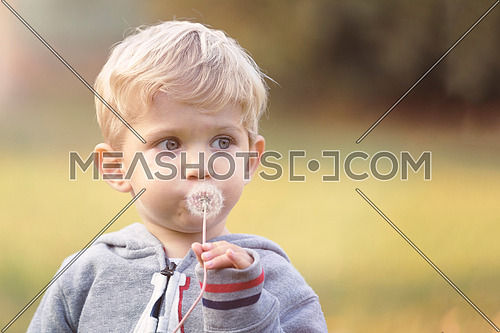 Portrait of baby boy blowing dandelion outdoor on park, blured background and used split toning.