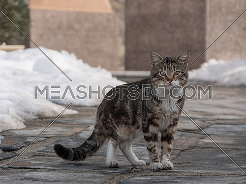 Wild and homeless cat on asphalt floor. Abandoned cat looking in camera. Adopt a cat concept photo.  Domestic cat lost. Adoption of a pet.