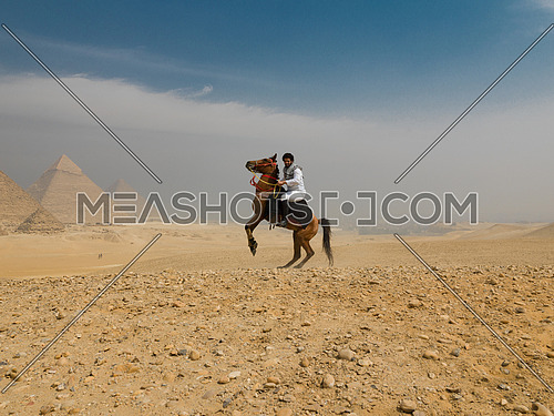 young  Egyptian   man riding arabian horse in desert,  giza platou with grand pyramids in background