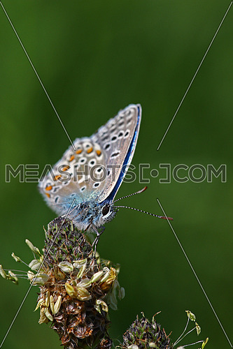 little blue butterfly against green background with room for your text