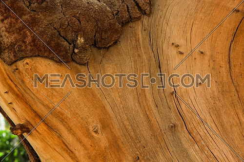 a photo showing a wooden old tree stem