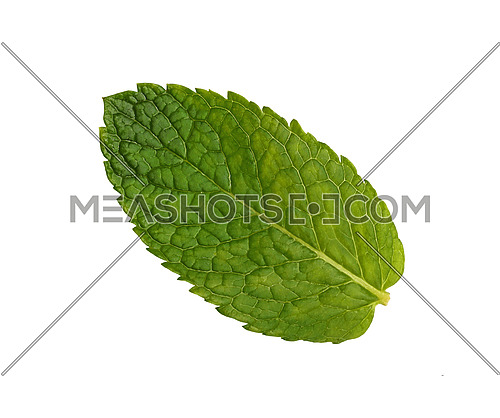 Close up one fresh green mint leaf isolated on white background, elevated top view, directly above