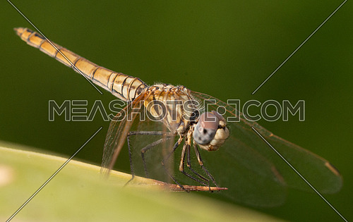 A macro shot of a dragon fly