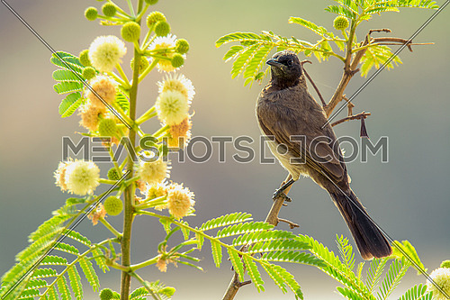 nightingale on a tree branch