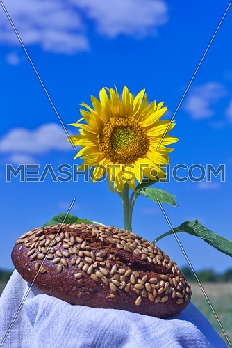 Colorful yellow sunflower with healthy loaf of wholegrain brown bread coated in sunflower seeds outdoors under a sunny blue sky in summer in a healthy diet concept