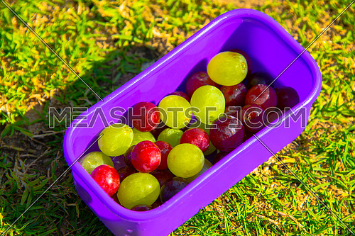 Mixed grapes in a small picknic box on the grass
