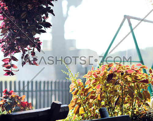 colorful balcony with flowers and nice garden