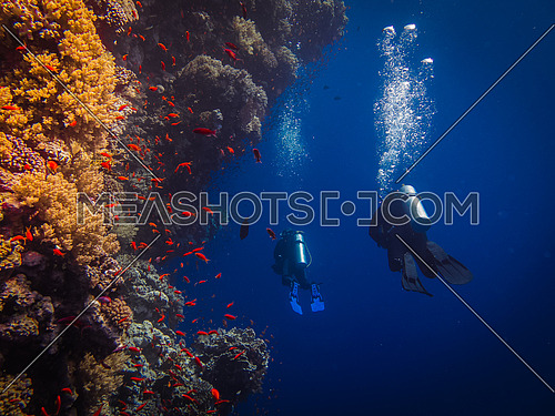 2 scuba divers passing by a coral reef underwater