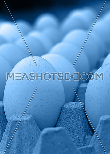 Close up many fresh blue toned chicken eggs in tray carton at retail display of farmers market, low angle view perspective