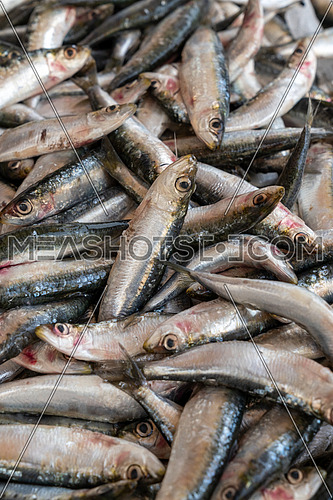 Group of fresh sardines sold at the market, seafood.