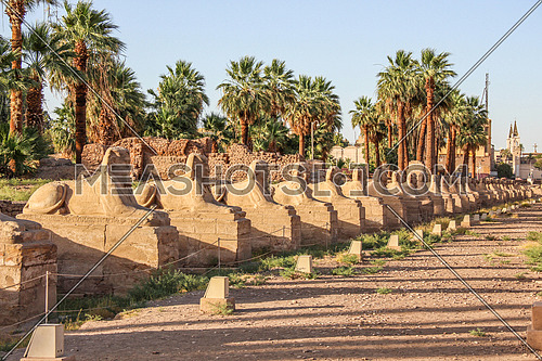 a photo for Luxor temple in Luxor city , Egypt