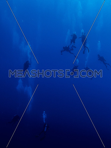 Divers in Blue water