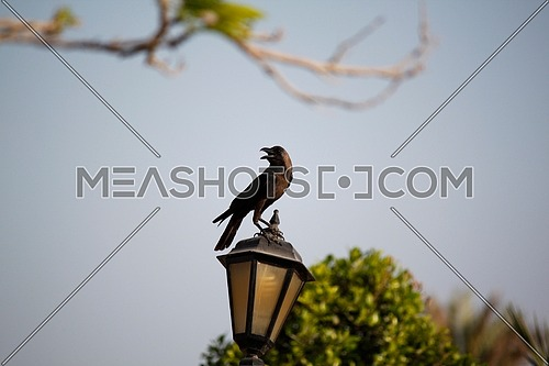 a crow standing on a lantern