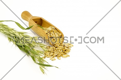 Oat flakes in wooden scoop and an oat branch isolated on white background with copy space