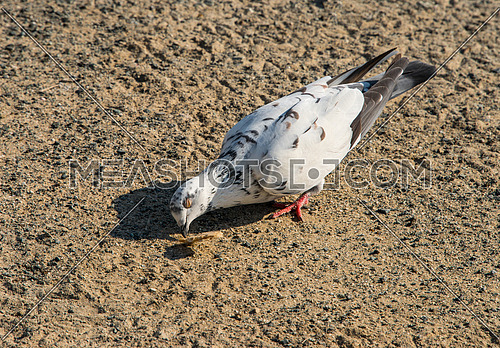 seagulls eating from the ground