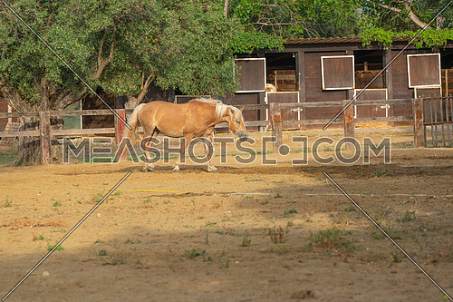 Horse In a corral at the ranch