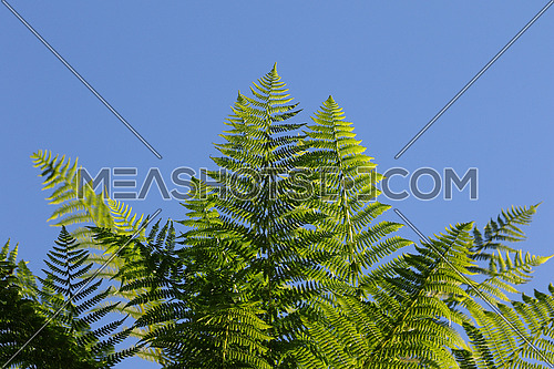 Group of green ferns against clear blue skies