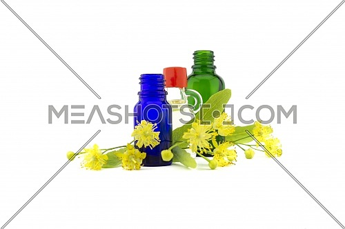 Fresh Linden or Tilia flowers and leaves with essential oil bottles in a therapeutic aromatherapy still life isolated on white background