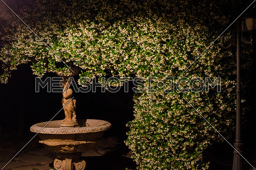 Jasmine tree going above a statue of a kid angle on a small dry water spring