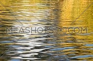 Colorful yellow and blue ripples and waves fast running on water surface, moving flow background, pan, Full HD 1080