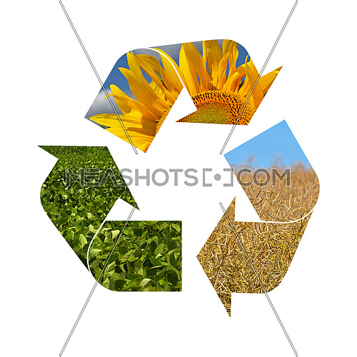 Illustration recycling symbol of agriculture crop, sunflower, soya, rapeseed, isolated on white background