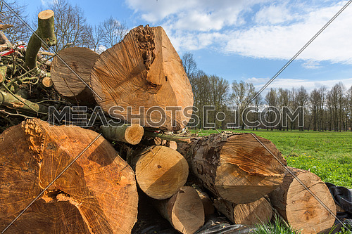In the picture trunks of trees cut