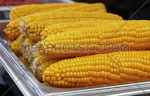 Several boiled or steamed ready to eat yellow corn cobs close up, low angle view