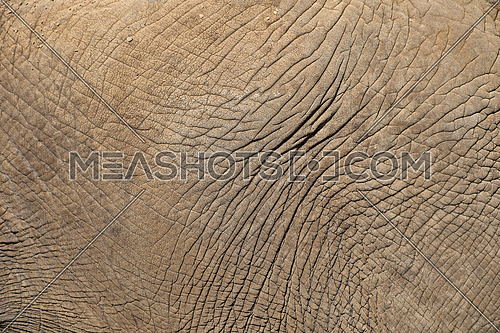 Close up background texture of elephant skin side view