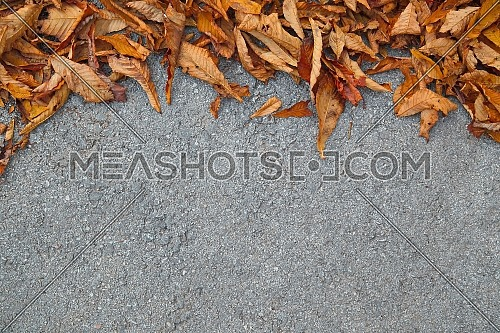 top shot for Leaves has fallen on the concret ground.