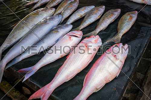 Fresh tropical fish in the market,Mauritius island.