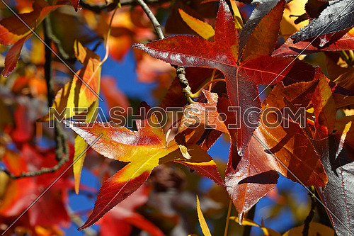 Colorful group of changing autumn leaves